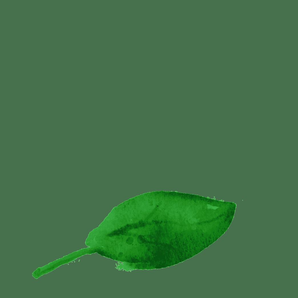 szpinak_2